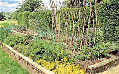 Reclaimed sleepers and willow - apparently Raised vegetable patches mean higher growth rates