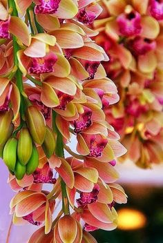Cimbidium Orchids - The lovely colors and unique shape of this flower are a winning combination.