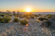 See the sunrise over the Botswana pans at Kubu Island. South Africa, Bliss, Sunrise, Country Roads, Island, Adventure, Amazing, Places, Outdoor