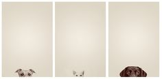 Excellent Minimalist Photography - Kahlua, Kaiser, Kona (dog cat dog) by cs.foto (simplybloomphotography)
