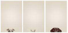Excellent Minimalist Photography - Kahlua, Kaiser, Kona (dog cat dog) by cs.foto (simplybloomphotography)