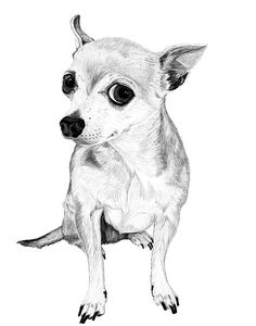 Custom Pet Portrait Illustration drawing gift art  your