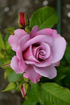 Per sempre L'amore... L'amore per sempre... Forza amore il nostro cuore che rende tutto possibile e...