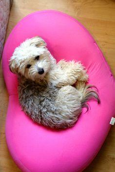 Pillow Talk Pillow Talk, Beautiful Dogs, Chinese, Pillows, Cute Dogs, Cushion, Throw Pillow, Cushions