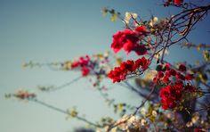 Flowers by Ian Zakharov