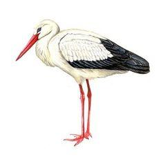 www.pripravy.estranky.cz - PRVOUKA - TAŽNÍ PTÁCI Birds, Animals, School, Animales, Animaux, Bird, Animal, Animais