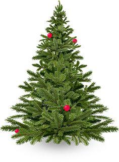 Coseli | Pregateste cel mai mare brad de Craciun, impreuna cu toti cei dragi Christmas Tree, Holiday Decor, Blog, Home Decor, Teal Christmas Tree, Decoration Home, Room Decor, Xmas Trees, Christmas Wood