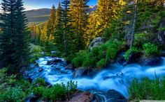Stream Through The Forest HD Desktop Wallpaper Mountain Wallpaper, Forest Wallpaper, Nature Wallpaper, Wallpaper Backgrounds, Peaceful Backgrounds, Forest River, Lake View, Background Images, Nature Photography