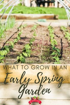 Get your garden growing in early spring with these cool season vegetables and herbs that can also take the warmer temps of early summer. Whether you're using a raised bed, containers, or an in-ground garden, these early spring veggies will grow for you!