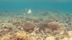 Неожиданная встреча! Красное море