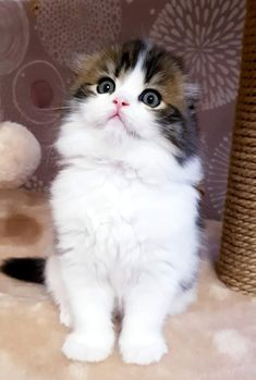 Kittens And Puppies, Cute Cats And Kittens, I Love Cats, Crazy Cats, Kittens Cutest, Cute Baby Bunnies, Cute Baby Animals, Funny Animals, Grey And White Cat