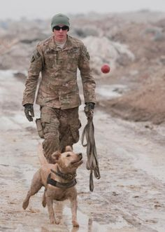 MWD. Military Working Dogs.