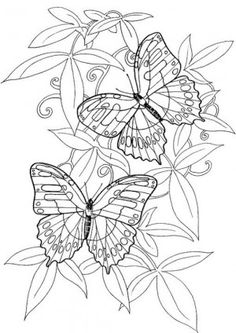 butterfly drawing - google zoeken   butterfly drawing   pinterest ... - Advanced Coloring Pages Butterfly