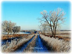 Frosted Prairie.