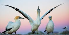 Wildlife and nature photography award-winning images of 2013, The Guardian – Mírame y sé color
