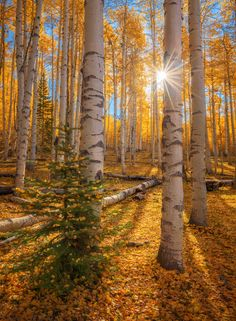 Forest Photography, Leaves, Fall, Autumn, Display, Explore, Sun Rays, Dreams, Sunsets
