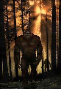 Sasquatch Bigfoot Poster | eBay