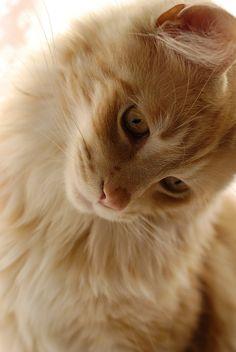 """mel-cat: """" Oscar (por dahowes) """""""