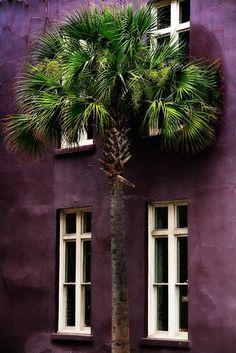 aubergine wall.