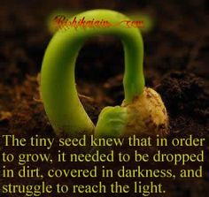 The tiny seed knew that in order to grow……..