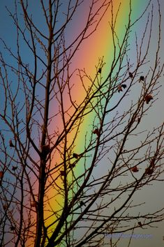 Más tamaños | Color - Rainbow Through the Sycamore | Flickr: ¡Intercambio de fotos!