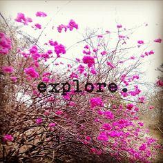 #explore
