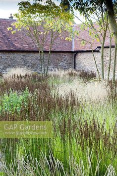 The Courtyard. Deschampsia cespitosa 'Goldtau', Molinia caerulea subsp arundinacea 'Moorhexe', Sesleria autumnal… (With images) Garden Spaces, Garden Plants, Plant Design, Garden Design, Somerset, Low Maintenance Garden, Garden Types, Ornamental Grasses, Plant Decor