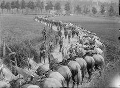 Royal Scots Greys , Montereul 8/5/1918