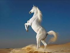 caballos pura sangre andaluces - Google Search Most Beautiful Horses, All The Pretty Horses, Animals Beautiful, Beautiful Creatures, Animals Amazing, Beautiful Unicorn, Stunningly Beautiful, Beautiful Images, Majestic Horse