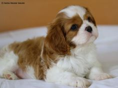 ♥ This pup is simply adorable!