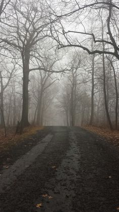The road up to Bowman`s Hill Tower - New Hope, Pennsylvania