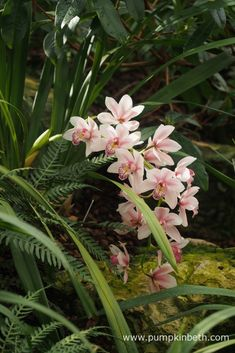 Orchids at Kew Gardens' Orchid Festival 2018 - Pumpkin Beth Flower Petals, Red Flowers, Beautiful Flowers, Botanical Art, Botanical Gardens, Mesa Exterior, Cymbidium Orchids, Kew Gardens, Pastel Shades