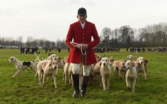 Huntsman Peter Collins with the hounds during the Quorn Hunt Boxing Day meet at Prestwold Hall in Loughborough.