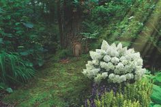 Line a garden path, tame an eroding slope, or tuck them into fairy gardens—hydrangeas are versatile and easy to grow in your landscape.