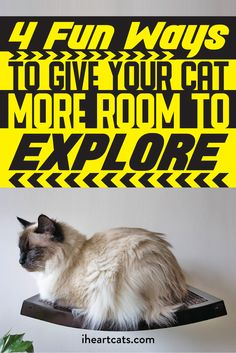 Ways for your kitty to explore up, down, over and under!