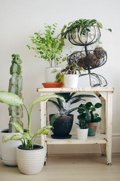 Tips for Keeping Indoor Plants Alive | abeautifulmess.com