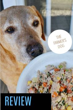 Curious About Fresh Dog Food from The Farmers Dog? Dog Food Delivery, Meal Delivery Service, Dog Food Reviews, Real Dog, Food Preparation, My Best Friend, Whole Food Recipes, Your Dog, Dog Lovers