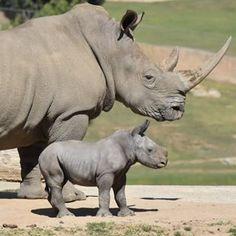 Videos | San Diego Zoo Safari Park