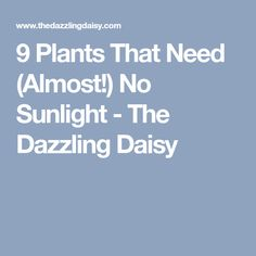 9 Plants That Need (Almost!) No Sunlight - The Dazzling Daisy