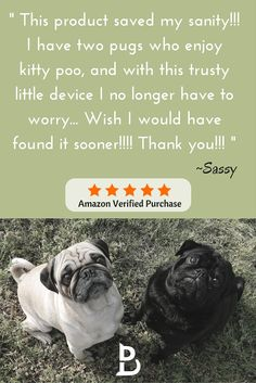 Another wonderful 5 Star Door Buddy Review... :) Door Buddy is keeping Sassy's two little pugs out of the kitty poo... Learn more  at TheDoorBuddy.com. Door Buddy makes it simple to dog proof the litter box.