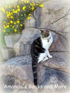 Our cat exploring the garden, yellow flowers, #WordlessWednesday #WW #BlogHop at http://abooksandmore.blogspot.com/2013/11/picture-perfect-party-linky-64.html #WW #bloghop