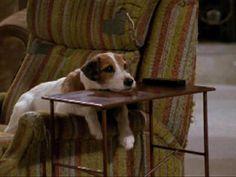 Moose the Jack Russell earned 10,000 each episode....Frasier