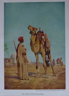 1954 Vintage Print Of An Arab With His Camel - Arabic - Islamic - Islam - Camel Print - Desert - Nomad - Nomadic - Muslim - Middle East -