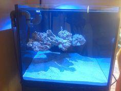 Floating aquascape in cube nano tank. Home Aquarium, Reef Aquarium, Planted Aquarium, Saltwater Tank, Saltwater Aquarium, Underwater Creatures, Ocean Creatures, Nano Reef Tank, Reef Tanks