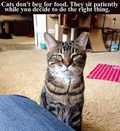 Will you do the right thing?  cat life, cats vs dogs, guilt trip, cat, memes, disapproval, your choice, crazy cat people, people organized under the new cat empire, pounce
