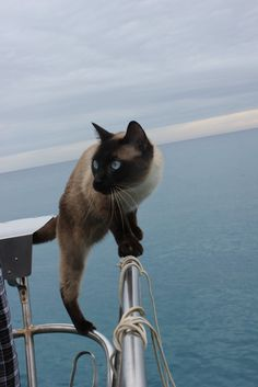 Meet Bailey Boat Cat, feline admiral with a French passport