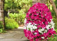 Además de embellecer tu jardín en casa, incluir plantas en su decoración es recomendable ya que reducen los niveles de dióxido de carbono y otros gases nocivos, disminuyen la cantidad de polvo y  brindan humedad óptima al ambiente.  Dale vida al exterior de tu hogar y sorprende a todos con una torre alta de flores, puedes combinar una gran variedad de plantas y colores.