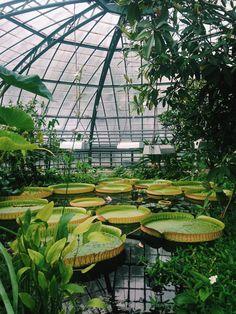 Viktoriahaus, Botanischer Garten der Universität Basel, Switzerland | Zhu Ohmu