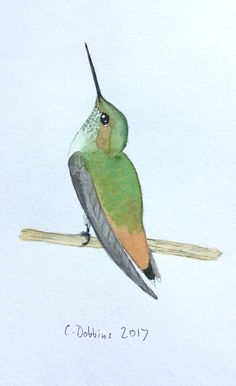 "Original Watercolor Painting of an Allen`s Hummingbird Adult Female - not a print - Original one of a kind watercolor painting  - signed - 5'x7"" painted on high quality, acid free paper - sold unframed - ships in 3-5 days - ships in protective plastic sleeve with sturdy backing board to ensure your order arrives in perfect condition. Copyright does not transfer with sale. Artist retains all reproduction rights."
