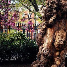 #WashingtonSquarePark - http://washingtonsquareparkerz.com/washingtonsquarepark-3/
